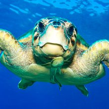 tartaruga-meloria